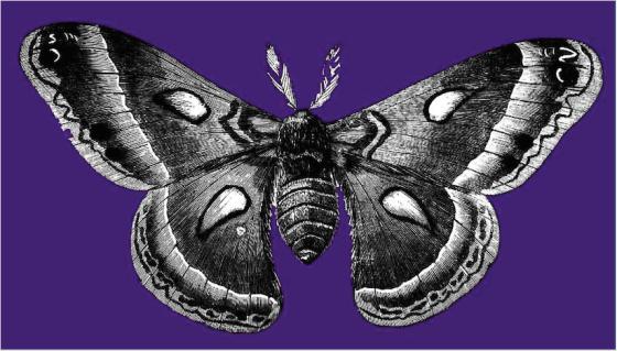 Word of Moth
